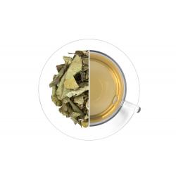 Letáček Zelený čaj